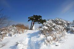 Winterland am Leuchtturm Dornbusch