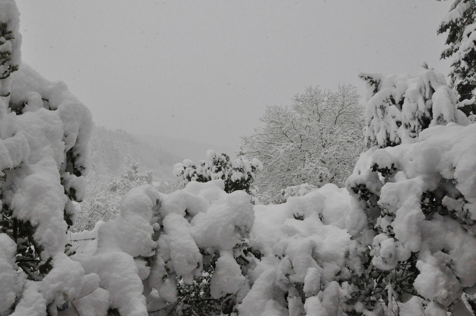 Winterlandschaft 09: Schneefall