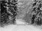 Winterlandschaft (6)