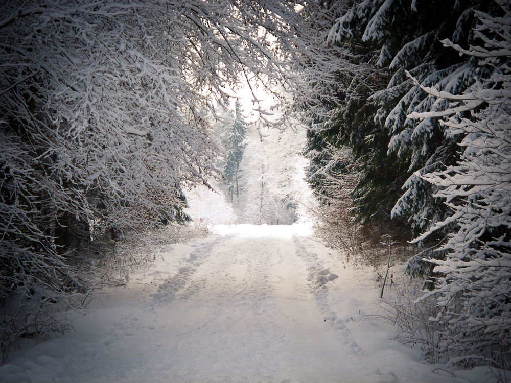 Winterlandschaft (7)
