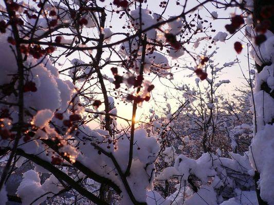 Winterlandschaft am Leopoldsberg - die Zweite