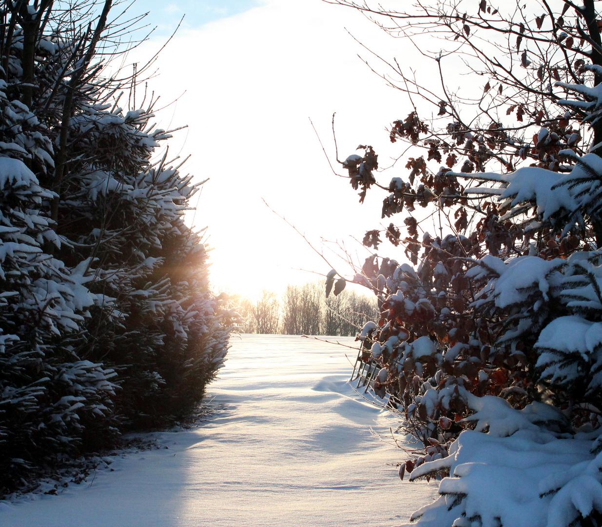 Winterlandschaft I