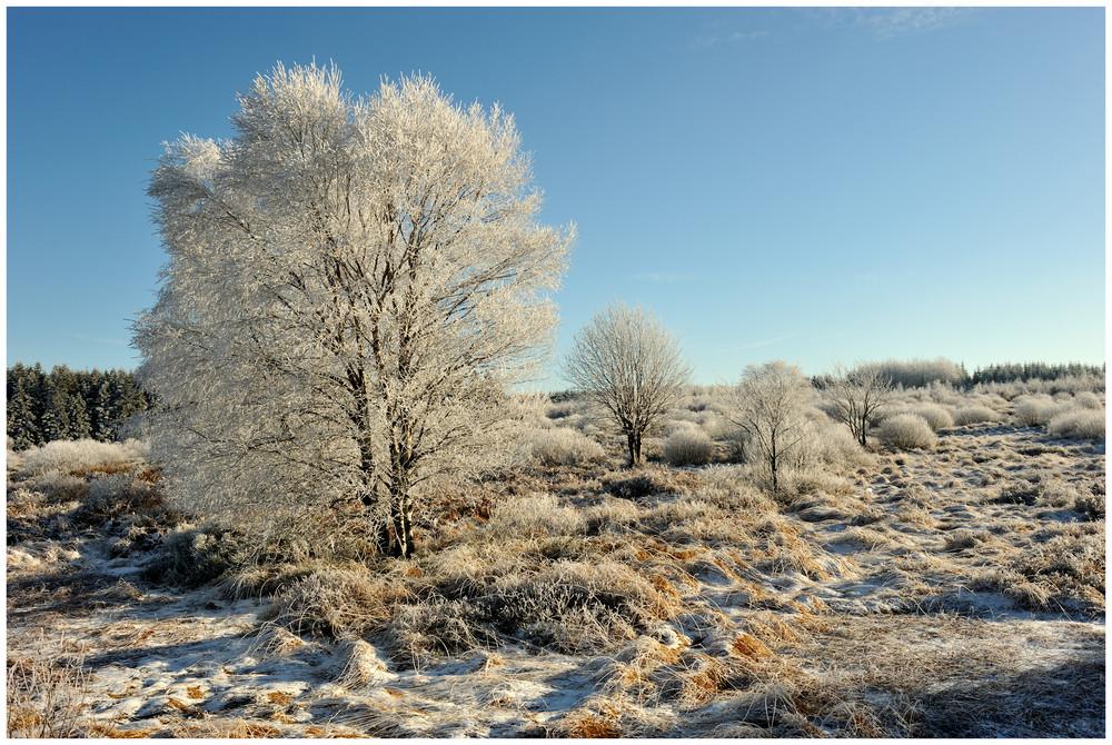 Winterlandschaft im Hohen Venn