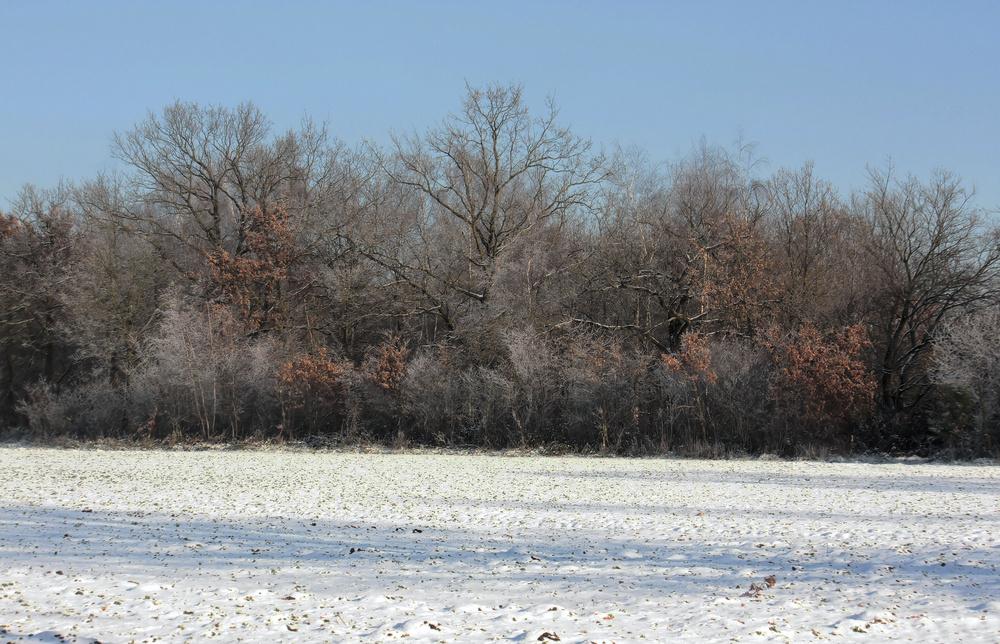 Winterlandschaft im November