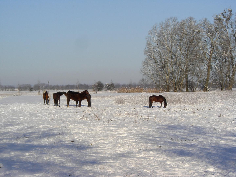 Winterlandschaft in der Nähe von Wriezen (Oderbruch )