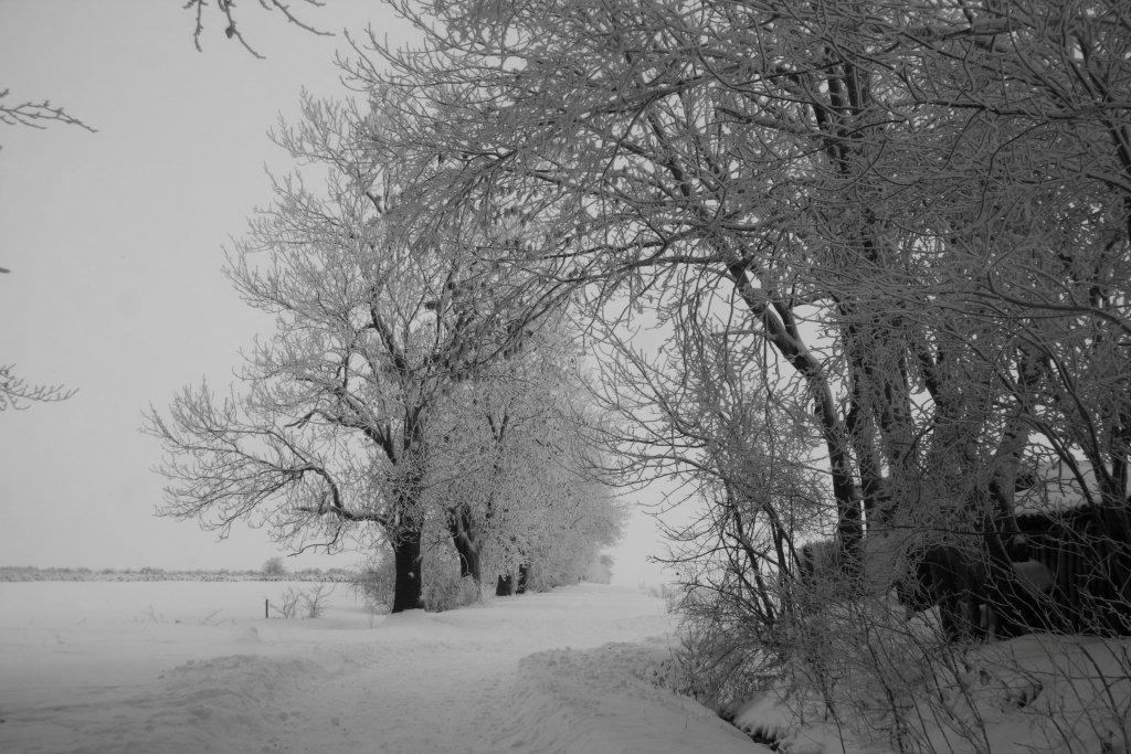 Winterlandschaft in schwarz-weiß (1)
