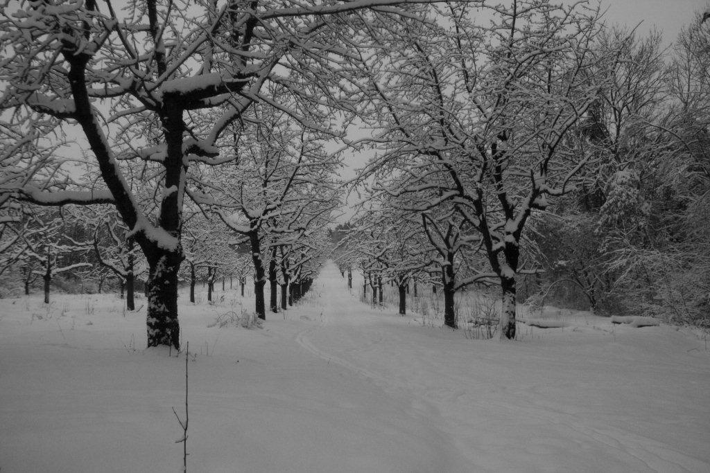 Winterlandschaft in schwarz-weiß (4)