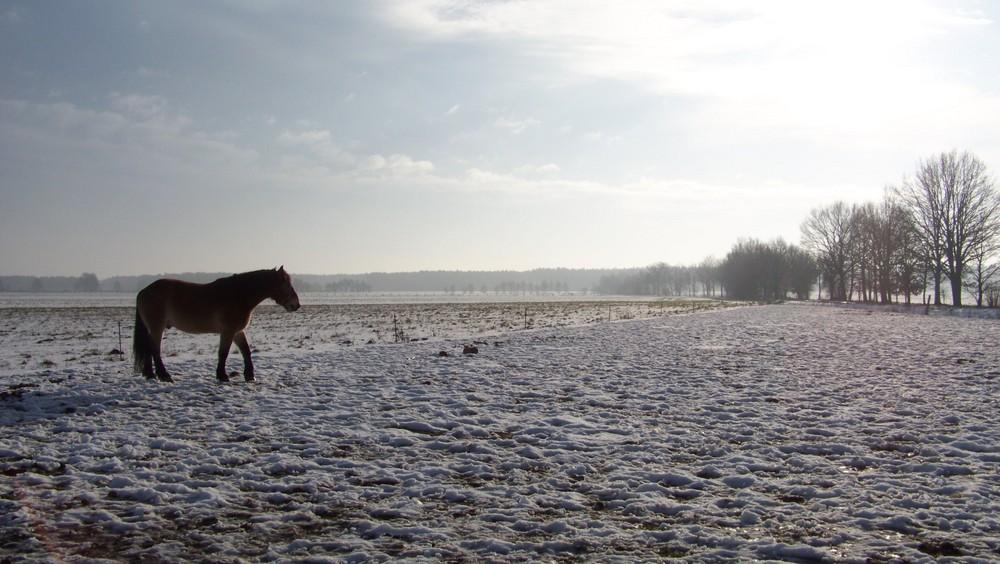 Winterlandschaft mit Pferd