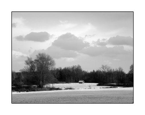 Winterlandschaft mit vielen Birken.