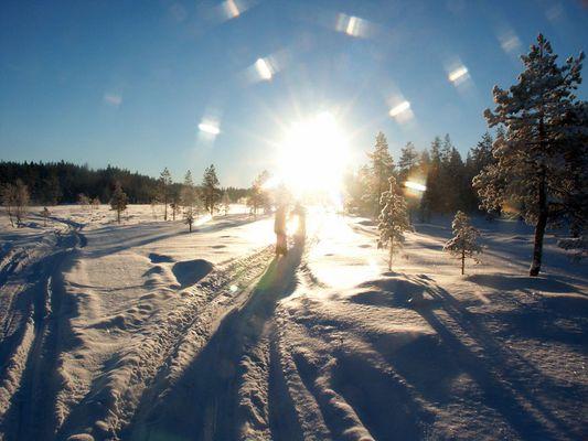 Winterlandschaft - Moor bei Hamra / Mora in Schweden