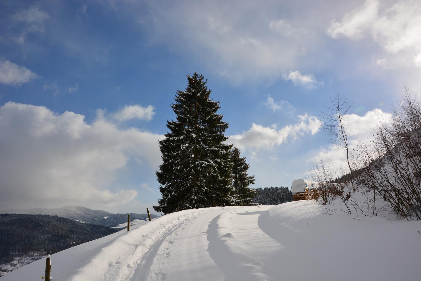 Schwarzwald Schnee