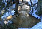 Winterlandschaft Schwarzwaldmoor
