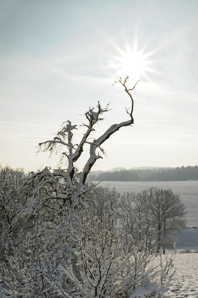winterlandschaft + sonnenschein