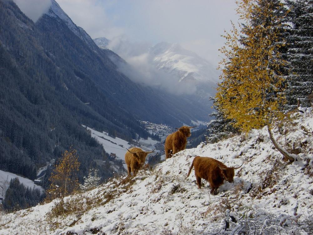 Winterlandschaft über Ischgl