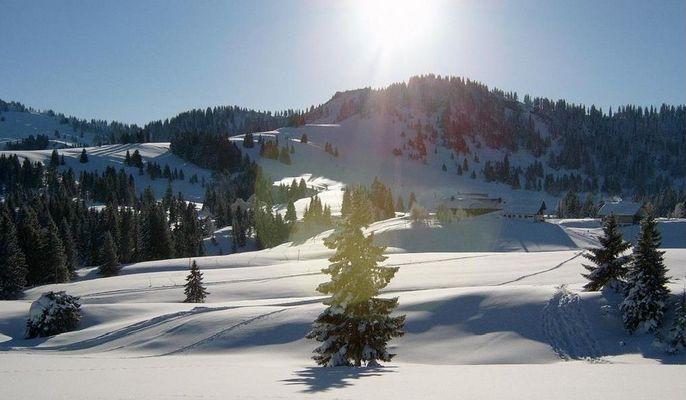 Winterlandschaft und ein Baum