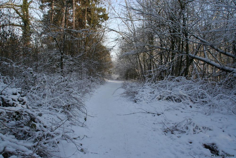 Winterlandschaften 1