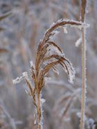 Winterlast