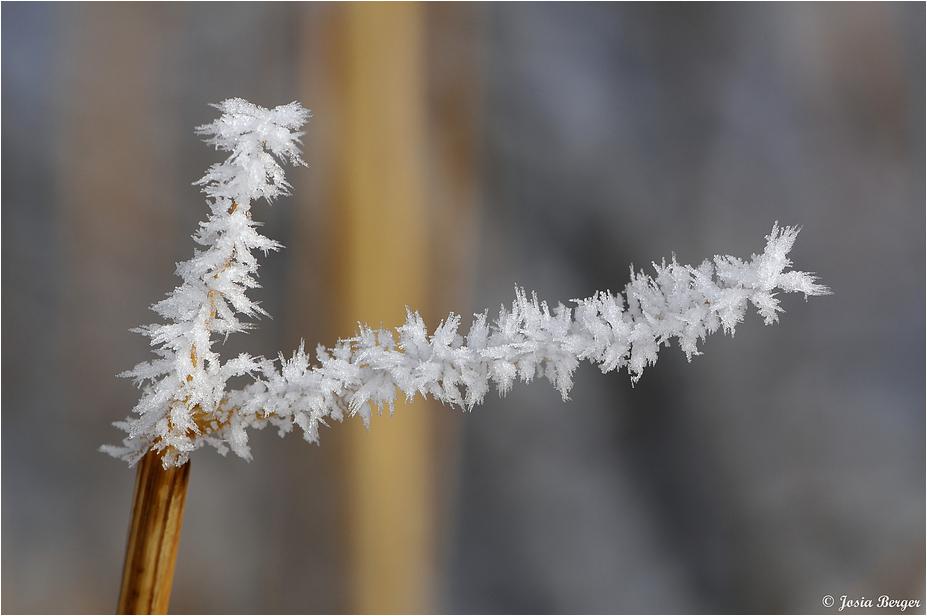 Winterlich geschmückt