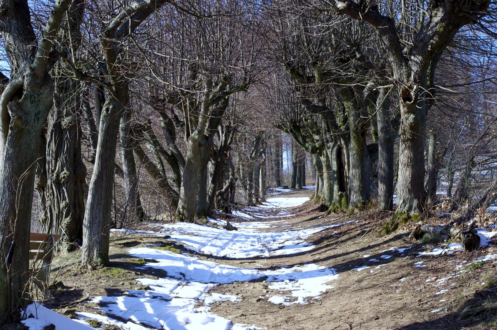 Winterliche allee auf kloster banz foto bild landschaft natur schnee bilder auf fotocommunity - Winterliche bilder kostenlos ...