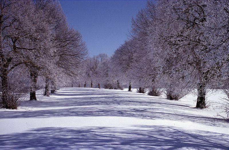 Winterliche allee ii reload foto bild jahreszeiten winter natur bilder auf fotocommunity - Winterliche bilder kostenlos ...