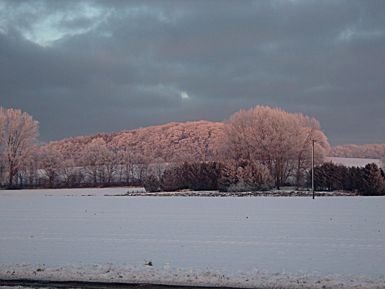 Winterliche Bäume in der Abendsonne