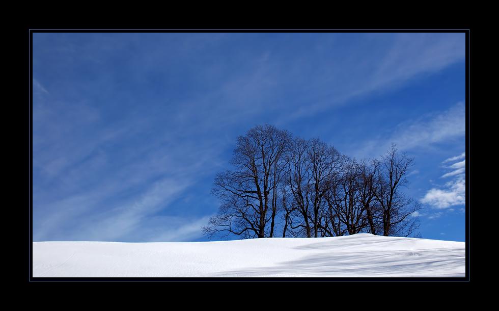 Winterliche Baumgruppe