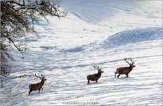 Winterliche Begenung