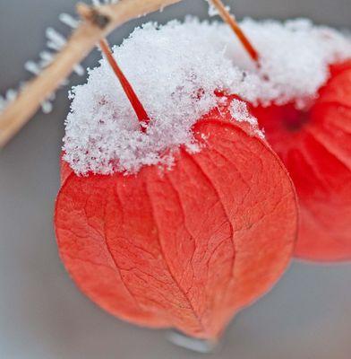Winterliche Farbenfreude