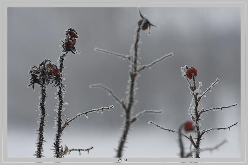 Winterliche Früchte