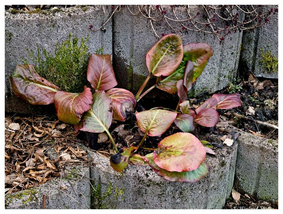 Winterliche Garten-Tristesse