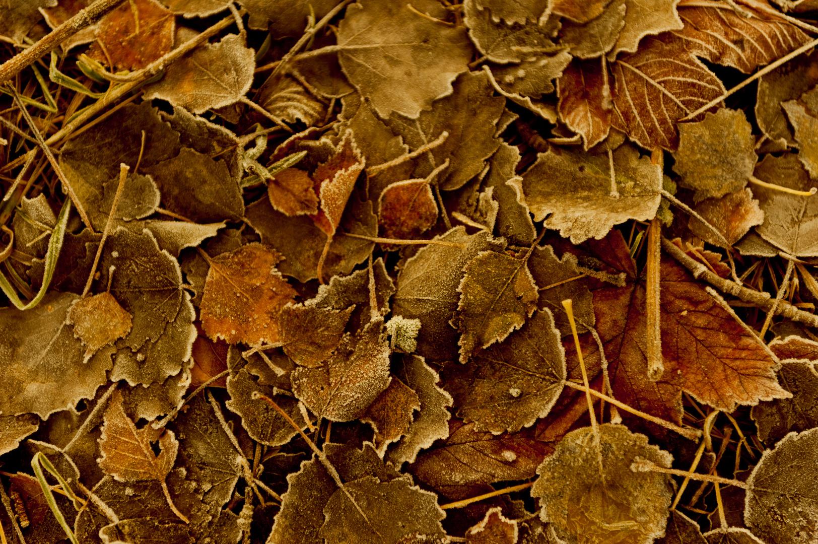 winterliche Herbststimmung