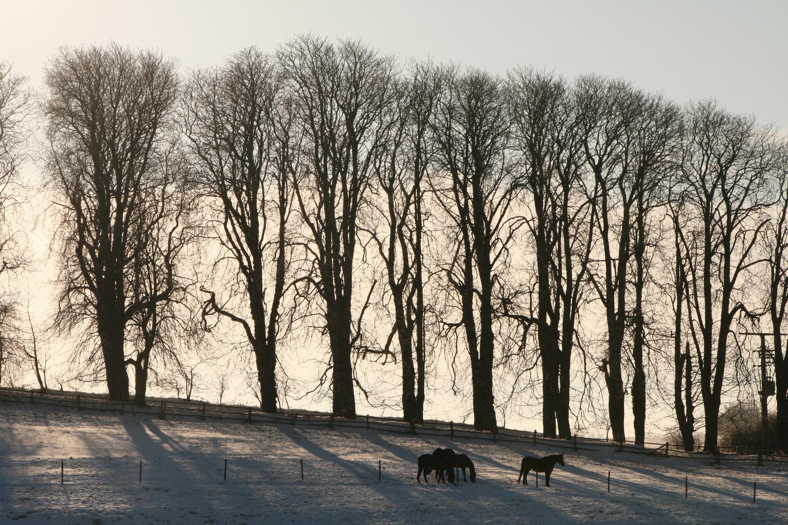 winterliche Impression