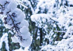 Winterliche Impressionen 03