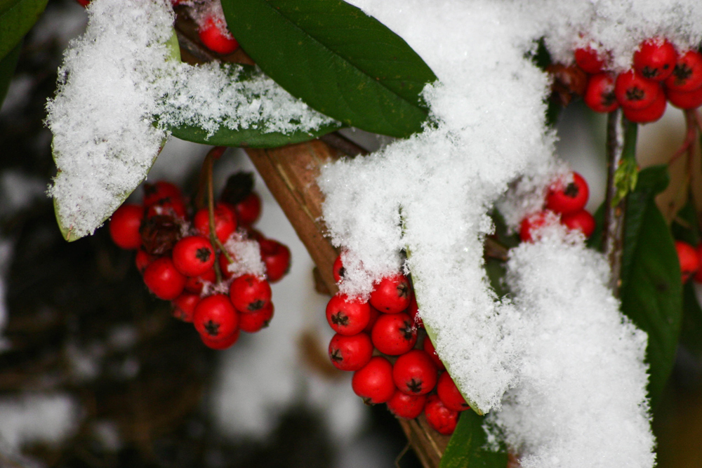 Winterliche impressionen foto bild jahreszeiten winter pflanzen garten bilder auf - Winterliche bilder kostenlos ...
