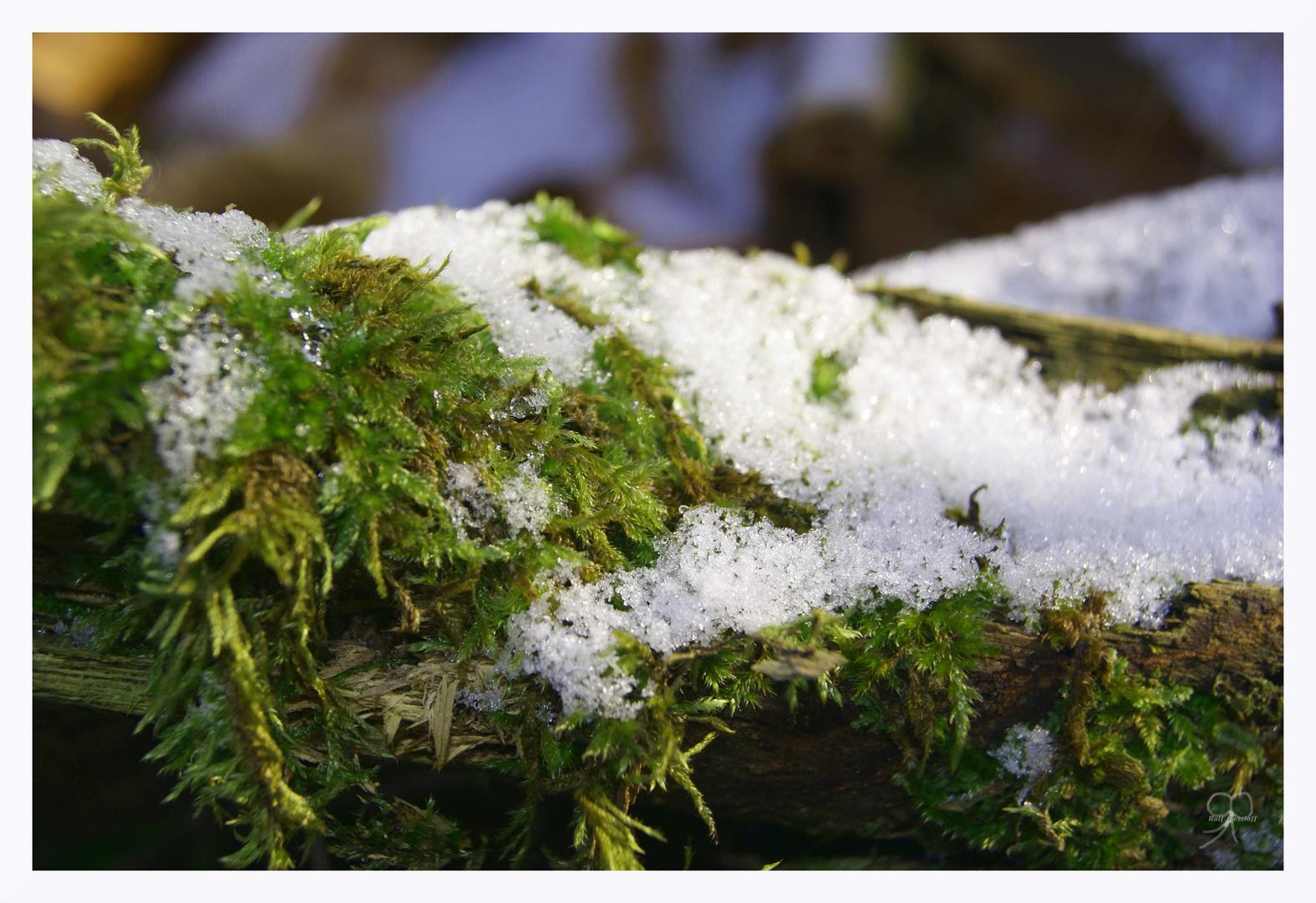 Winterliche Impressionen...