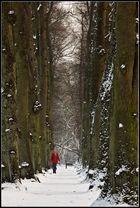 Winterliche Lindenallee