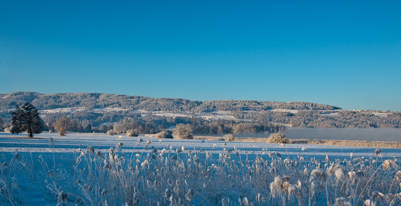 Winterliche Morgenstimmung am Greifensee