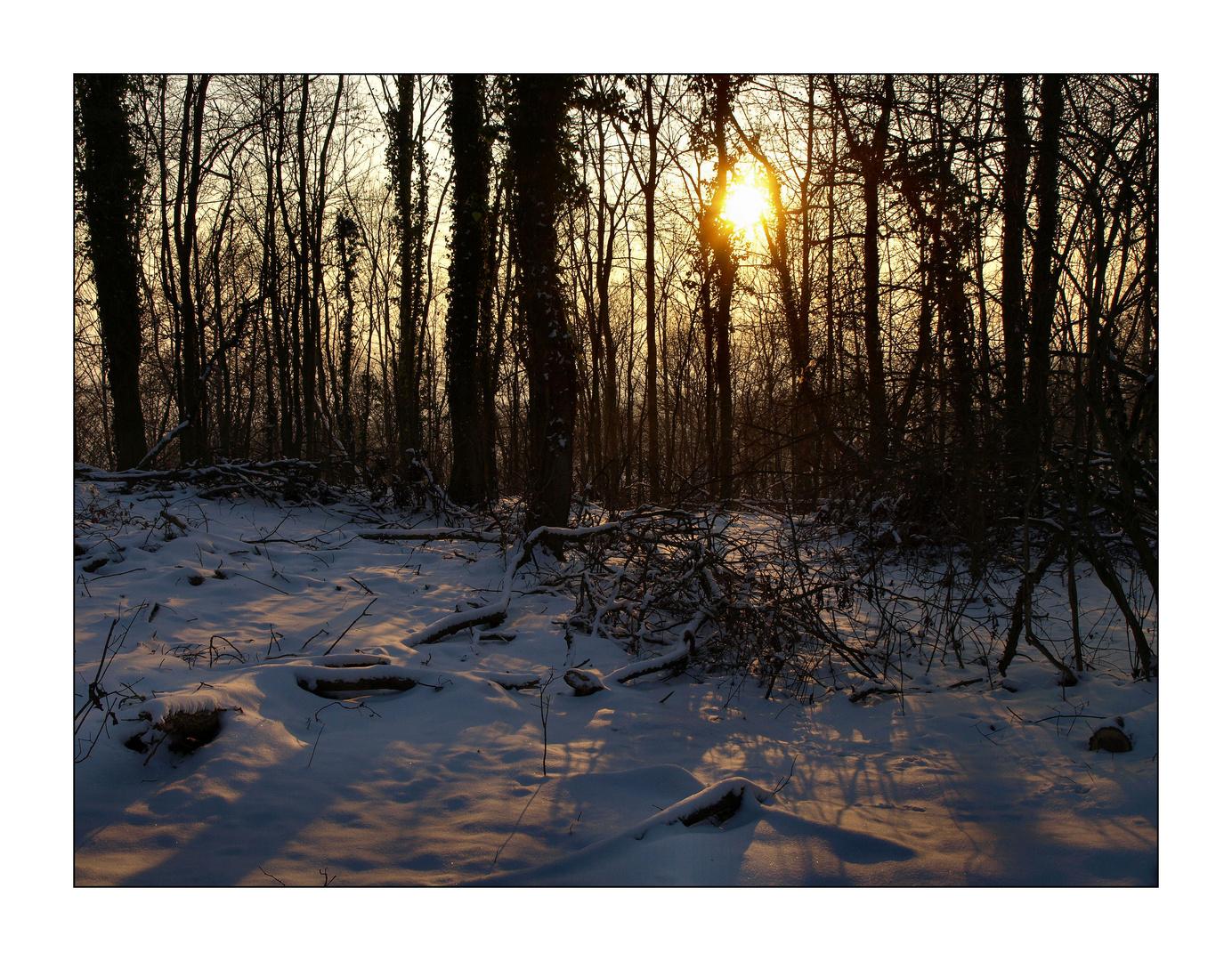 Winterliche Sonne