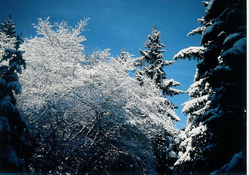 Winterliche Stimmung (1)