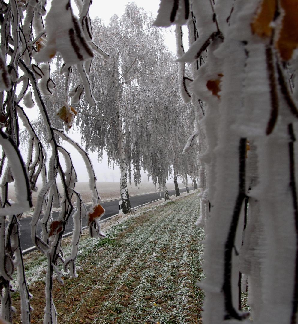 """""""Winterliche Stimmung vom 16.11.11"""""""
