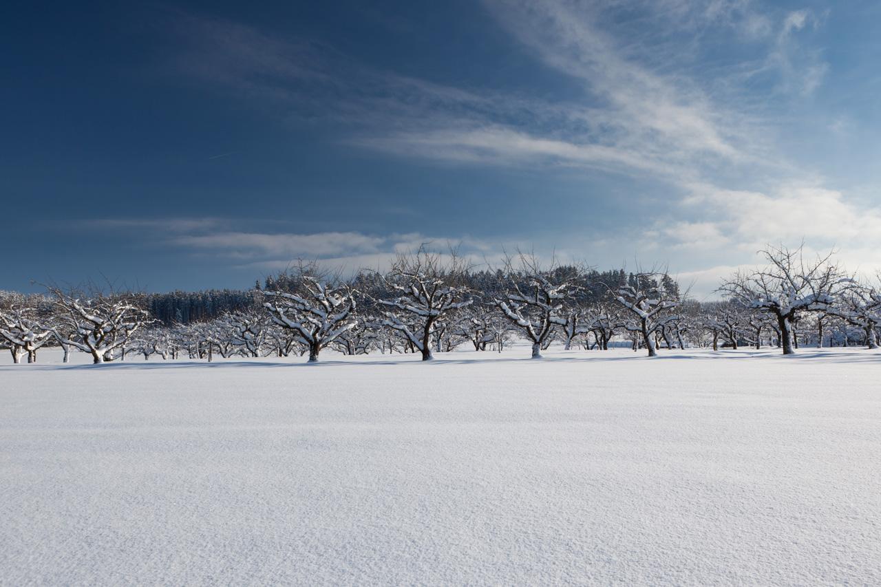 Winterliche Streuobstwiese
