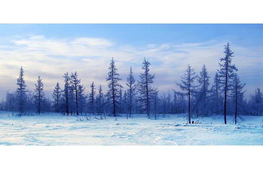 Winterliche tundra tundra in winter foto bild europe eastern europe russia bilder auf - Winterliche bilder kostenlos ...