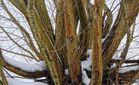 Winterliche Weide