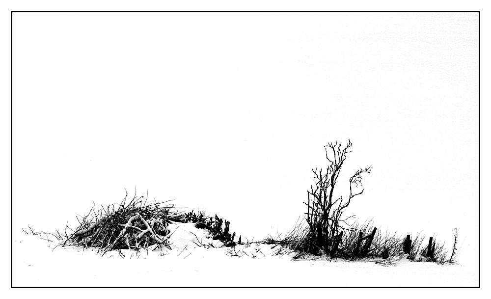 winterliche Wiese