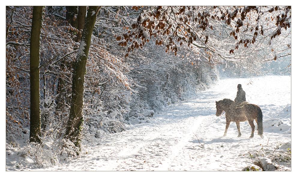 Winterlicher Ausritt
