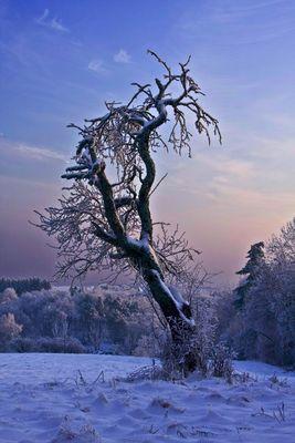 winterlicher Baum