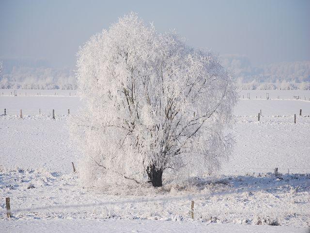 Winterlicher Niederrhein2