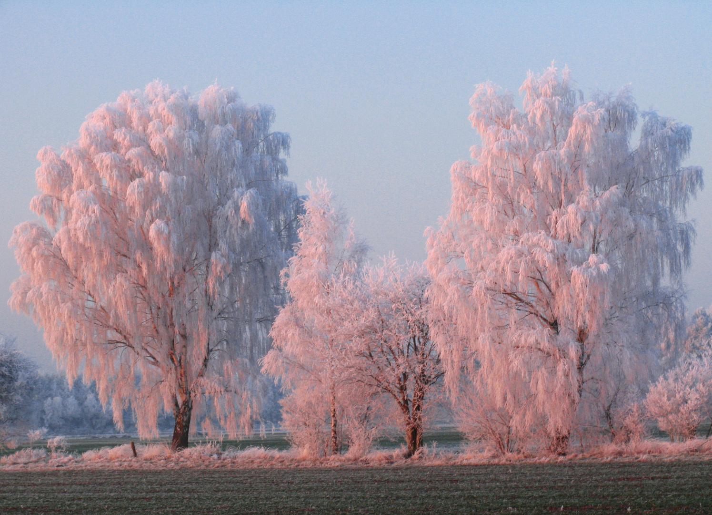 Winterlicher Spätnachmittag in der Nordheide