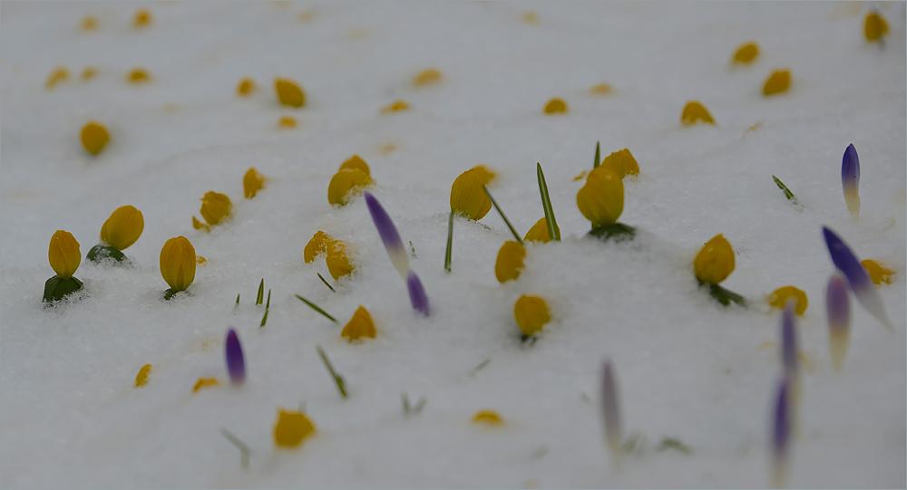 Winterlicher…,frühlingshafter…,