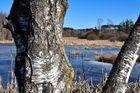 winterliches Hochmoor